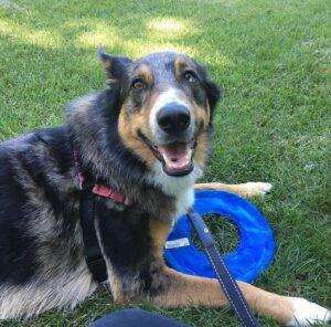Dog good behavior Slatington PA Educanine Training Service
