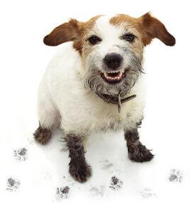 behavior modification dog training allentown pa