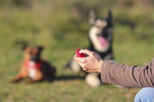 educanine dog training clicker positive reinforcement