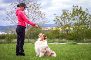 allentown dog training educanine