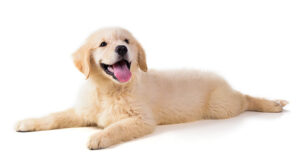 puppy training in your home allentown pa