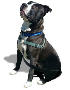 dog with advanced training allentown