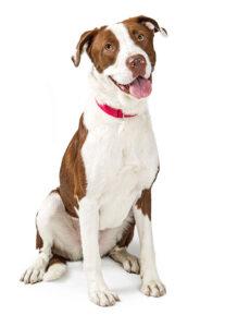 dog in training educanine allentown pa